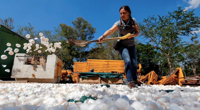 La innovadora iniciativa para limpiar uno de los ríos más contaminados de México con cascarones de huevo (infobae.com)