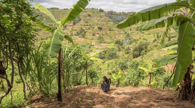 Día Mundial contra la Desertificación: la degradación de tierras socava el bienestar de 3,200 millones de personas (Noticias ONU)
