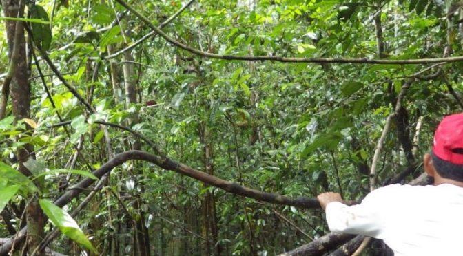 Perú – Turberas peruanas: potencial, desafíos y oportunidades de unos ecosistemas impresionantes (Forest News)