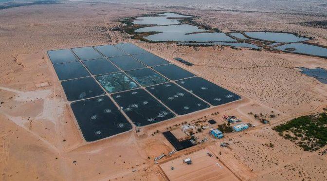 Baja California- Las Arenitas, un humedal artificial que purifica el agua contaminada (México Desconocido)