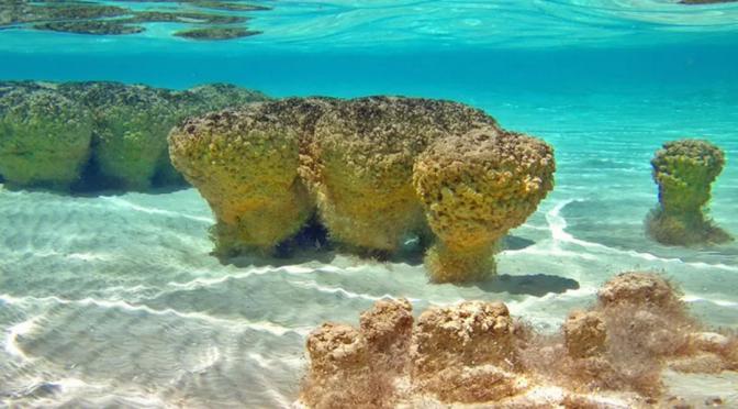 Bacalar, ¿calidad de agua incompatible con su vida acuática? (Cronica)