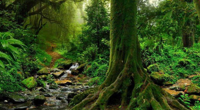 México: El gran bosque de agua tiene el 2% de la biodiversidad mundial (MXCity)