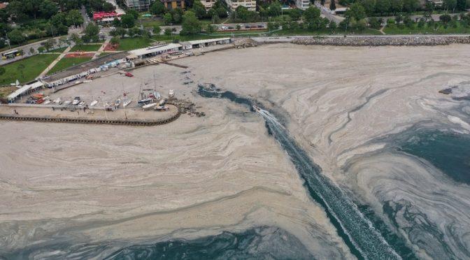 En Turquía, mar se llena de 'moco marino'; lo atribuyen al calentamiento global (Milenio)