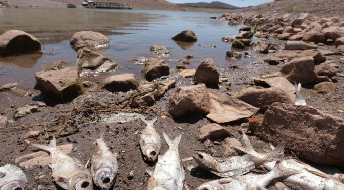 Gto – Quieren combatir el estrés hídrico de Guanajuato con Cauce Bajío (Milenio)