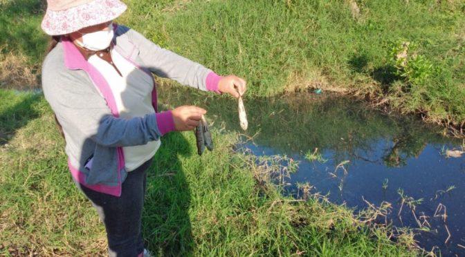 Bolivia – Defensoría investiga contaminación de vertientes de agua en Campo Pajoso-Yacuiba (El País)