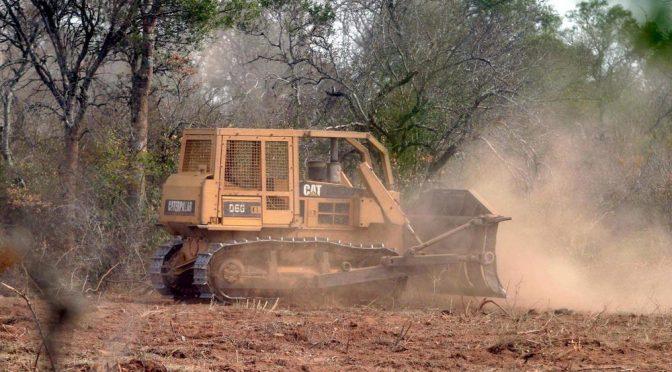 Argentina-Día Mundial del Ambiente : Contradicciones y desafíos para el Chaco (chacoonline)