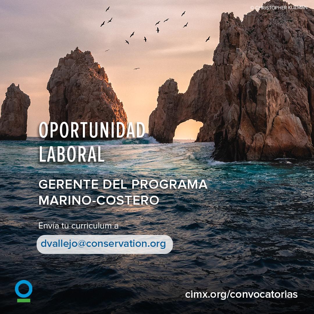 Vacante – Gerente del Programa Marino-Costero (Conservación Internacional México)
