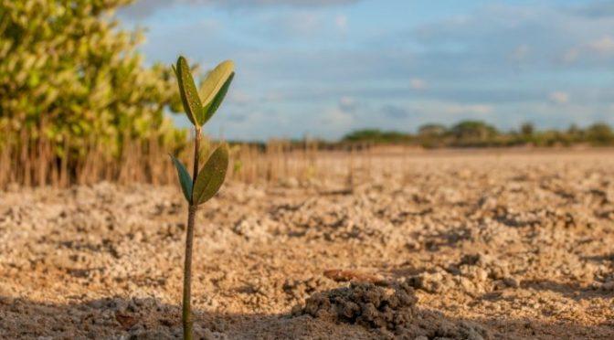 Mundo – Agua, innovación y tecnología: un aporte desde la agricultura (El Mostrador)