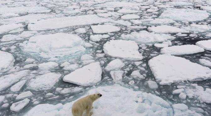 Mundo – El deshielo del Ártico está enviando químicos tóxicos y permanentes al océano (NatGeo)