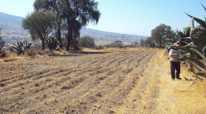 Guanajuato – Viven sequía 26 municipios de Guanajuato, de extrema a severa (Milenio)