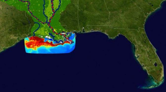 """Golfo de México – """"Zona muerta"""" del golfo de México: la preocupante expansión de esta área en la que la vida marina es imposible (BBC NEWS)"""
