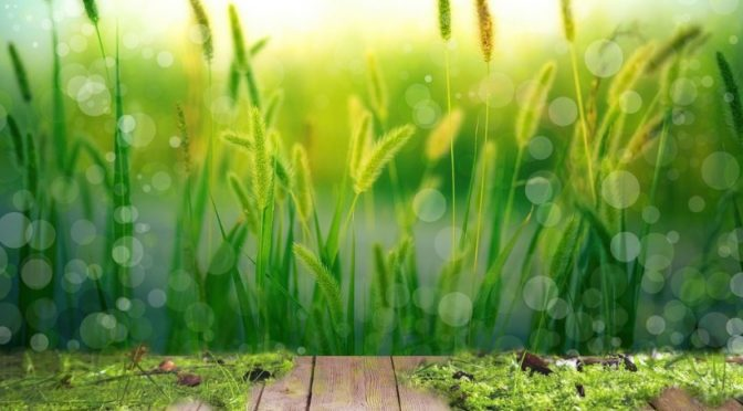 Irlanda – Usar la naturaleza para tratar las aguas residuales (smart water magazine)