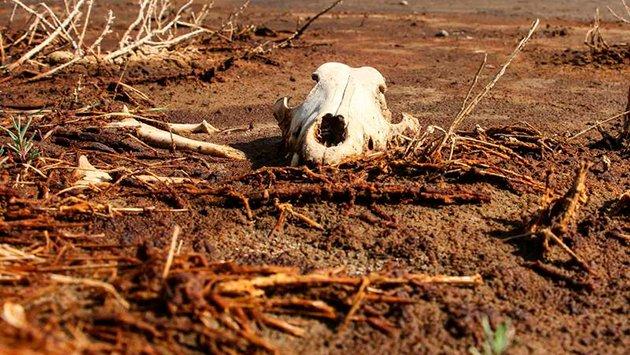 México se esta secando, pero ¿qué va a impedir que esto suceda? (Zócalo)