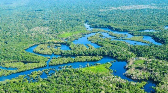 Mundo – La gestión de los bosques del mundo debe centrarse en el agua (ONU)