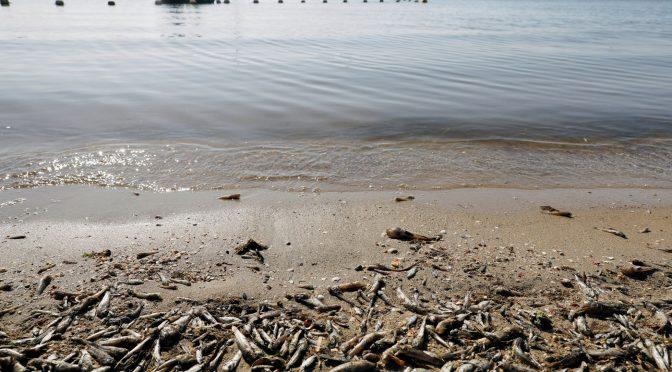 España – Sigue la agonía del Mar Menor (El País)