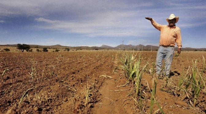 México – Semarnat declara emergencia por sequía en el país (El Heraldo de México)