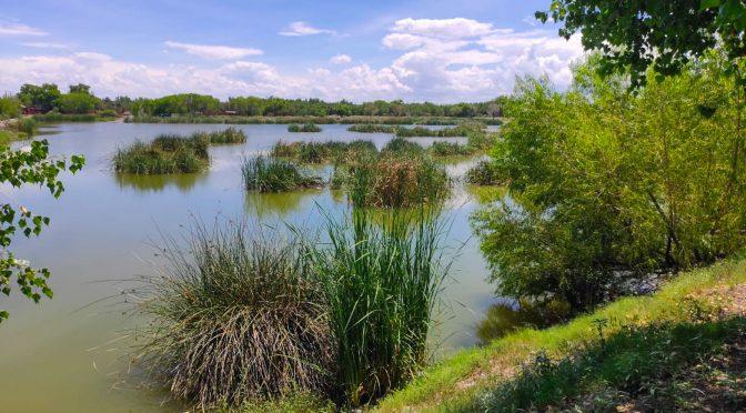 Chihuahua – La importancia de los humedales, acciones de conservación en Meoqui, Chihuahua (Pronatura Noreste)