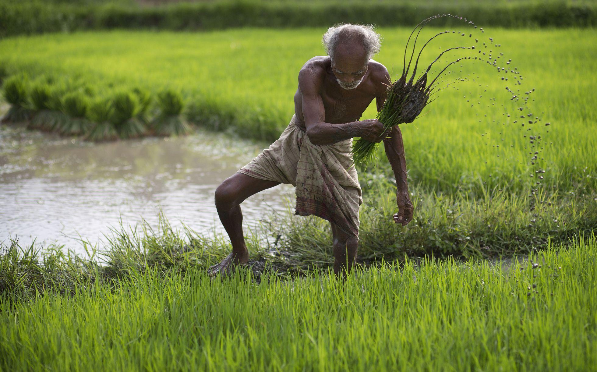 Mundo – Cómo alimentar a la población mundial sin agotar el agua dulce del planeta (El País)