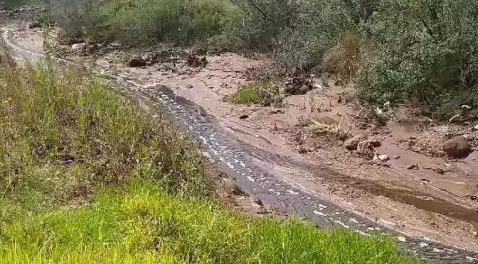 Estado de México- Clausuran relleno sanitario en Naucalpan; puede estar ligado con muerte de peces en la presa Madín (Milenio)
