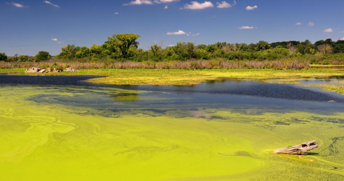 Mundo – Las extinciones están ligadas a la salud de ecosistemas acuáticos (El Ágora Diario)