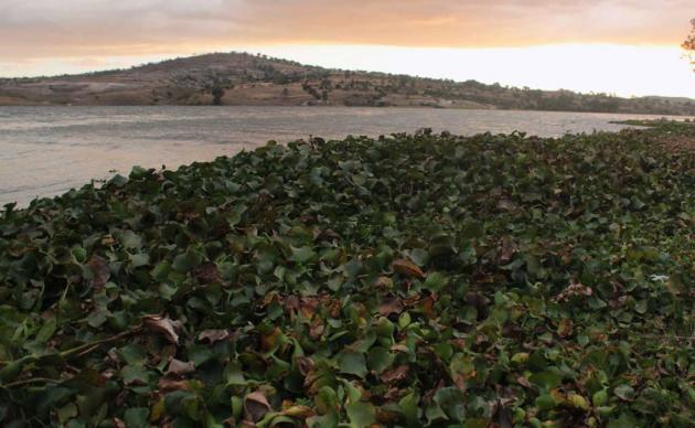 Puebla – Se prepara ante posible desbordamiento de la presa Valsequillo (El Universal)