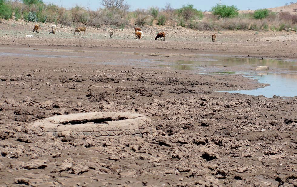 Chihuahua – Tuvieron pérdidas por sequía (El Diario)